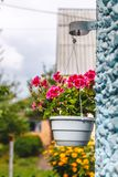 Decor outside the house, pink geraniums in a hanging flowerpot on the wall of the house.  royalty free stock photos