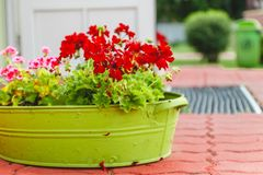 The decor outside the house, pink and red geraniums in a metal green basin-vase stock images