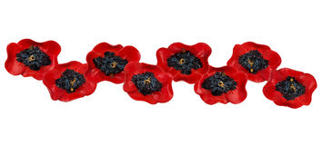 Decor of red poppies Stock Photography