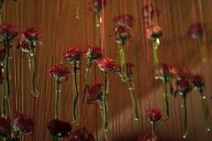 Decor with roses. Glass test tubes with red rose flowers hang Royalty Free Stock Image