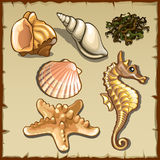 Decor of seashells and seaweed, six icons Stock Images