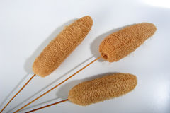 Decor Sponges. Three dried decor sponges on sticks on white surface. Shadows on surface Stock Photo