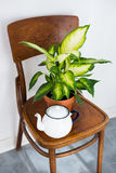 Decor for summer balcony. Vintage enamel tea pot and green home plants on an old wooden chair, cozy decor for summer balcony interior Stock Image