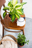 Decor for summer balcony. Vintage enamel tea pot and green home plants on an old wooden chair, cozy decor for summer balcony interior Stock Images