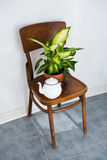 Decor for summer balcony. Vintage enamel tea pot and green home plants on an old wooden chair, cozy decor for summer balcony interior Stock Photos
