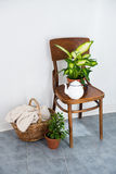 Decor for summer balcony. Vintage enamel tea pot and green home plants on an old wooden chair, cozy decor for summer balcony interior Royalty Free Stock Image