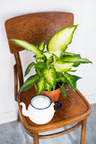 Decor for summer balcony. Vintage enamel tea pot and green home plants on an old wooden chair, cozy decor for summer balcony interior Royalty Free Stock Photography