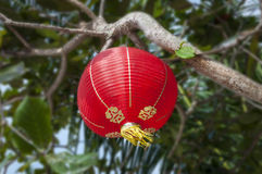 Decoração chinesa do ano novo Fotografia de Stock
