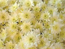 Decoração com as flores encontradas na sepultura. Imagem de Stock Royalty Free