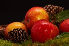 Decoração com maçãs vermelhas, cones do pinho, um ramo velho um musgo Fotos de Stock Royalty Free