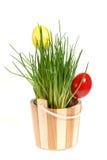 decoração com ovos de easter Imagens de Stock