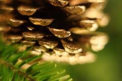 Decoração da árvore do Xmas com cone Fotos de Stock