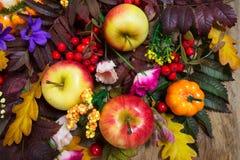 Decoração da ação de graças com folhas, maçãs, rosa e purp de Rowan Imagens de Stock Royalty Free