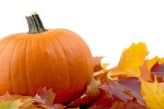 Decoração da abóbora com as folhas de outono para o dia da ação de graças no branco Fotos de Stock