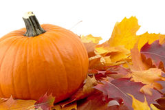 Decoração da abóbora com as folhas de outono para o dia da ação de graças no branco Foto de Stock