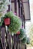 Decoração da casa - flores em potenciômetros em trilhos da casa Fotos de Stock Royalty Free