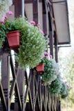 Decoração da casa - flores em potenciômetros em trilhos da casa Imagem de Stock