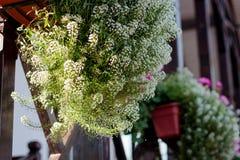 Decoração da casa - flores em potenciômetros em trilhos da casa Fotografia de Stock
