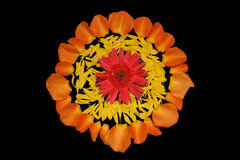 Decoração da flor Foto de Stock