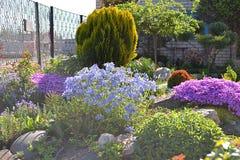 Decoração da flor do monte alpino fotografia de stock royalty free