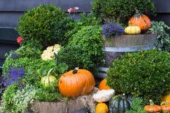 Decoração da jarda da queda com abóboras e flores foto de stock