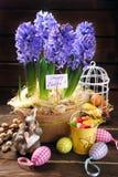 A decoração da Páscoa com jacinto fresco floresce no backgrou de madeira Imagens de Stock