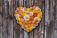 Decoração da parede da flor eterna Fotos de Stock