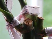 Decoração da planta da fortuna do close-up foto de stock