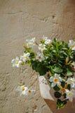 Decoração da rua com as plantas de florescência no potenciômetro natural do arenito imagens de stock