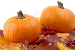 Decoração das abóboras com as folhas de outono para o dia da ação de graças no branco Fotografia de Stock