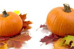 Decoração das abóboras com as folhas de outono para o dia da ação de graças no branco Fotografia de Stock Royalty Free