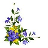 Decoração das flores da pervinca e da margarida Imagens de Stock