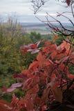Decoração das folhas do vinho Fotos de Stock