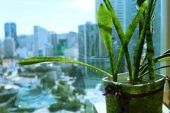 Decoração das plantas Fotos de Stock Royalty Free