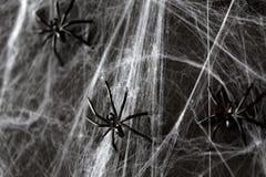 Decoração de Dia das Bruxas de aranhas pretas do brinquedo na Web Imagem de Stock