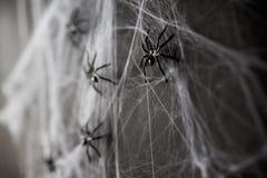 Decoração de Dia das Bruxas de aranhas pretas do brinquedo na Web Imagens de Stock