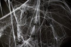 Decoração de Dia das Bruxas de aranhas pretas do brinquedo na Web Fotografia de Stock