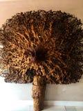 Decoração de madeira seca fotos de stock royalty free