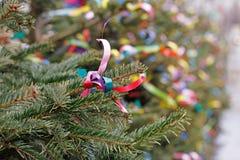 Decoração de ramos do abeto com fitas coloridas Imagem de Stock Royalty Free