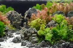 Decoração do aquário Imagens de Stock Royalty Free