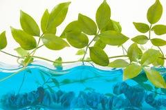 Decoração do aquário foto de stock