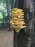 A decoração do fungo livra Imagem de Stock