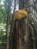 A decoração do fungo livra Imagens de Stock