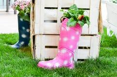 Decoração do jardim da mola Imagem de Stock Royalty Free