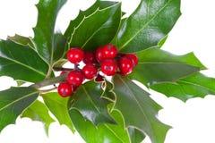 Decoração do Natal com azevinho Imagem de Stock Royalty Free