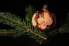 Decoração do Natal com o galho do abeto vermelho Imagem de Stock Royalty Free