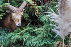 Decoração do Natal com uma cabra Fotografia de Stock Royalty Free
