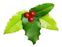 Decoração do Natal da baga do azevinho isolada Fotos de Stock Royalty Free