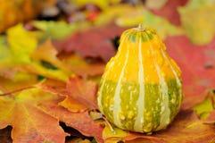 Decoração do outono Fotografia de Stock