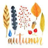 Decoração do outono da aquarela com folhas, bagas e penas Coleção da aquarela para decorações do feriado Fotos de Stock Royalty Free